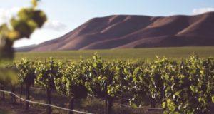 Víte, že šumivá vína se hodí ke všemu? Nenechávejte si je jen na oslavu